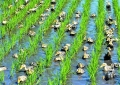 现代农业发展情况调研报告